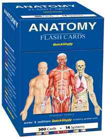 Anatomy By Barcharts, Inc. (COR)